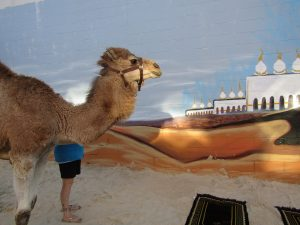 percy the camel